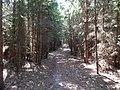 +20180611Müritz-Nationalpark.nahe Kratzeburg.-055.jpg