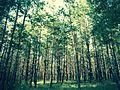 Байрочные леса 1.jpg