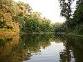 Вечір на річці Псел в заказнику Хорішки.jpg