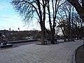 Група багатовікових дубів на валу в Чернігові.jpg