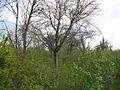 Дендрологічний парк 267.jpg
