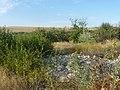 Заброшенный дачный посёлок - panoramio (59).jpg