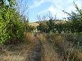 Заброшенный дачный посёлок - panoramio (65).jpg