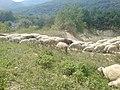 На горе Шаян - panoramio.jpg
