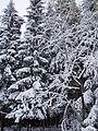 Пос. Красный Воин зимой - panoramio (1).jpg