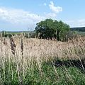 Прошлогодняя трава - panoramio.jpg