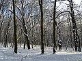 Украина, Киев - Голосеевский лес 164.jpg
