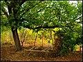 دیدنیهای پاییز مراغه - panoramio (3).jpg