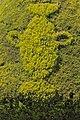 عکس آرایش گلها و گیاهان- عمارت رکیب خانه.jpg