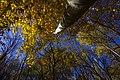 پاییزدر ایران-قاهان قم-Autumn in iran-qom 18.jpg