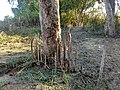 လမုပင်၏ လေရှူမြစ်များ.jpg