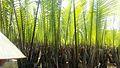 水椰林中穿梭8.jpg