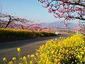 穴山の桃源郷 - panoramio.jpg