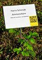 008k09d Ausstellung WasserKunst Zwischen Deich und Teich, Tafel Harro Schmidt, Ammonshorn, Material Kunstharz Leuchtdioden, mit Dank an Corona Solar (für das geliehene Solarpanel).jpg