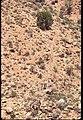 013 Grand Canyon Aerial of Burro Damage 1975 (4951579993).jpg
