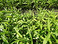 0251jfPanoramics Pulilan Fields Plants Philippinesfvf 19.JPG