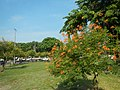 08597jfIntramuros Anda Circle Bonifacio Drive Port Area Manilafvf 28.jpg