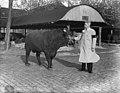11-10-1947 03197 Stier op de Veemarkt (6330793849).jpg