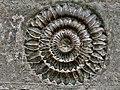 11th century Panchalingeshwara temples group, Kalyani Chalukya, Sedam Karnataka India - 61.jpg