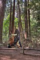 16 21 0055 redwood.jpg