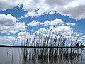 2009-365-179 Arizona Postcard Day (3669578775).jpg