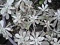 2010. Выставка цветов в Донецке на день города 110.jpg