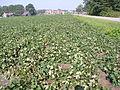 20110829-FSA-XX-0003 - Flickr - USDAgov.jpg