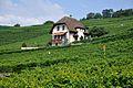 2012-08-12 10-14-11 Switzerland Canton de Vaud Rivaz.JPG