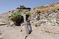 2012 - Pine - Ancient Thera - Santorini - Greece.jpg