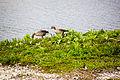 2015 05 24 Deutschland Baden-Württemberg Landkreis Sigmaringen Naturschutzgebiet Zielfinger Vogelsee (18).jpg