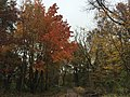 2017-11-09 14 26 37 View along a walking path during late autumn in the Franklin Farm section of Oak Hill, Fairfax County, Virginia.jpg