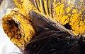 2248 5500b5 detail Chewa Mask (7452401152).jpg