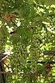 33054 Lignano Sabbiadoro, Province of Udine, Italy - panoramio (17).jpg