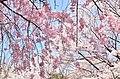 3 Chome Shimoyugi, Hachiōji-shi, Tōkyō-to 192-0372, Japan - panoramio (2).jpg