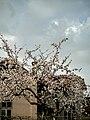 5790 Toros, Bulgaria - panoramio (2).jpg