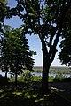 71-220-5076 Shevchenko Oaks SAM 7179.jpg