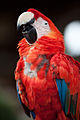 9AM is too early for parrots, too (4669673529).jpg
