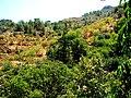 A@a Askas village nicosia cyprus - panoramio (3).jpg