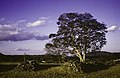 ASC Leiden - Rietveld Collection - East Africa 1975 - 05 - 038 - Panorama view from Great Zimbabwe. A tree in a landscape - Masvingo, Zimbabwe.jpg