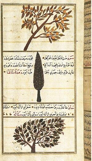 Science in the medieval Islamic world - Quince, Cypress, and Sumac trees, in Zakariya al-Qazwini's 13th century Wonders of Creation