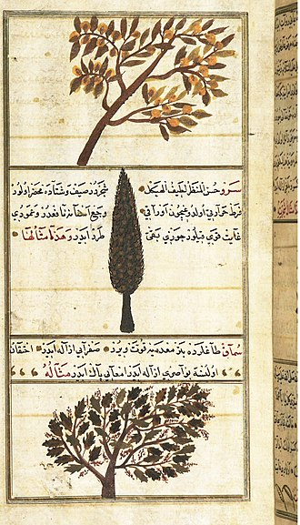 Science in the medieval Islamic world - Quince, Cypress, and Sumac trees, in Zakariya al-Qazwini's 13th century Wonders of Creation
