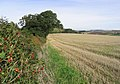 A hedge and stubble field between Samieston and Upper Samieston - geograph.org.uk - 240963.jpg
