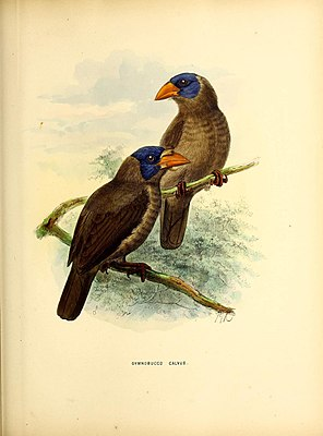 Illustration von 1871