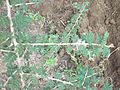 A small plant..JPG