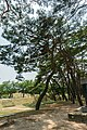 A tree in Andong.jpg
