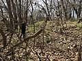 A woman surveys a trail trace at Rock Creek Crossing in Council Grove, KS - 2 (76e2b9f2b65e445a998e30a34f3919e7).JPG