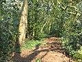 A woodland garden - geograph.org.uk - 437015.jpg