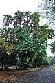 Acharya Jagadish Chandra Bose Indian Botanic Garden - Howrah 2011-02-20 1583.JPG