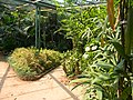 Acharya Jagadish Chandra Bose Indian Botanic Garden - Howrah 2011-03-20 2067.JPG