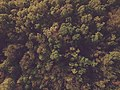 Aerial view of a forest (Unsplash).jpg